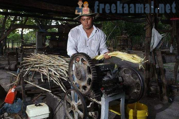 The manufacturing process of sugar cane
