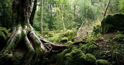 Forest Puzzlewood in the UK, which was inspired by Tolkien