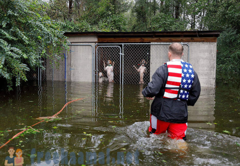 As the rescuing animals from the hurricane,
