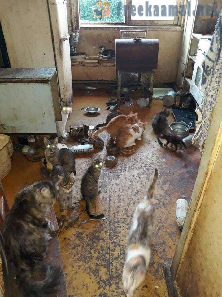 In Riga, the pensioner in the apartment kept more than 20 cats