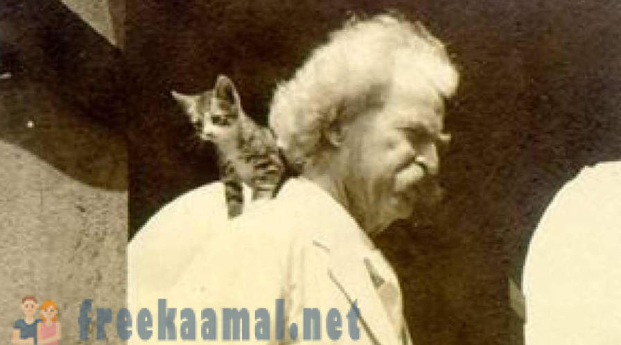 Cat before a fall: the craziest cat owner in history