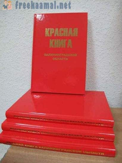 The history of the Red Book