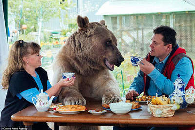 Big, plush, your history Stepan bear who lives in the Russian family