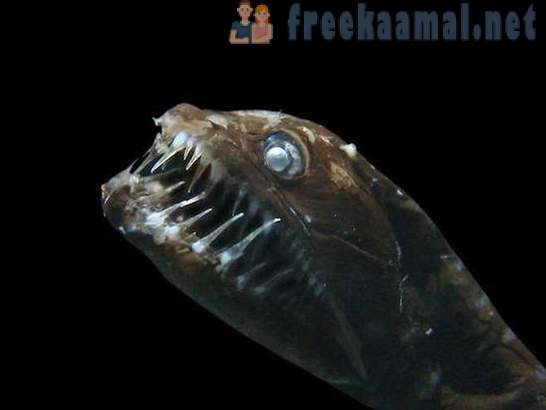 10 most bizarre sea creatures