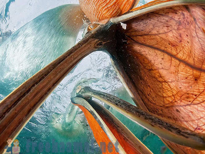 The best photos of National Geographic for March 2013