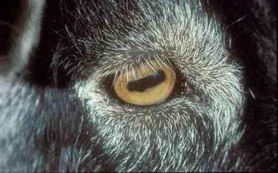 Animals with incredible eyes