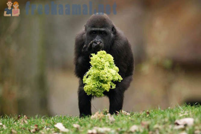 Best pictures of animals in 2011